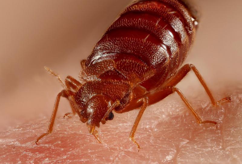 Hotel Bedroom Pests & Rodent Risks